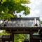 Japan-_DSC3692-Edit